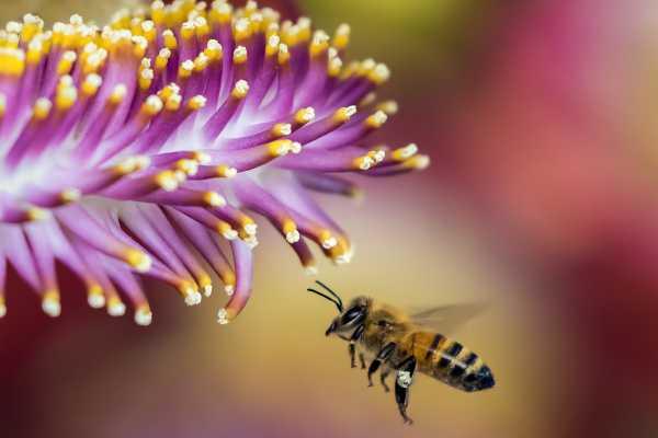 méhecske és a virág